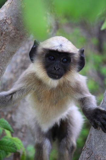 Monkey The Portraitist - 2015 EyeEm Awards Animals Nature_collection Wildlife Outdoors India Hampi  Traveling Taking Photos