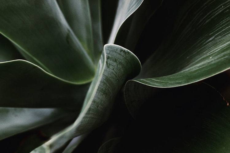 Close-up of flower plant against black background