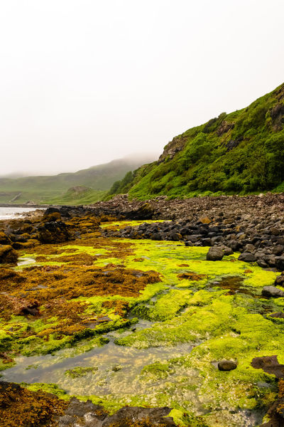 Walking around wild lands.... Excursion EyEmNewHere Foggy Weather Green Color Mull Island Perspectives On Nature Beauty In Nature Cliff Foggy Grass Landscape Mist Moss Nature No Patterns No People Outdoors Rocks Scenics Sea Front Sky Water Wildlife Yellow