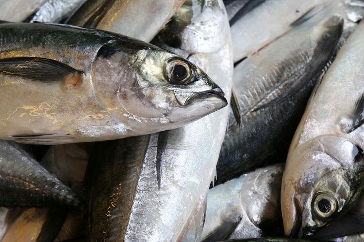 Full frame shot of mackerel fish for sale in market