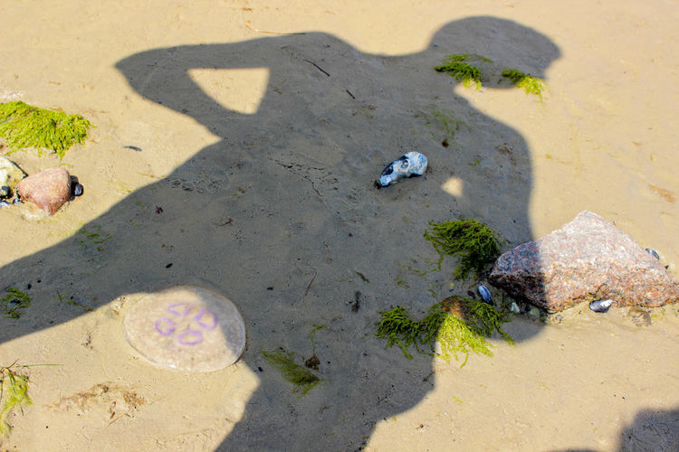 High angle view of horse on beach