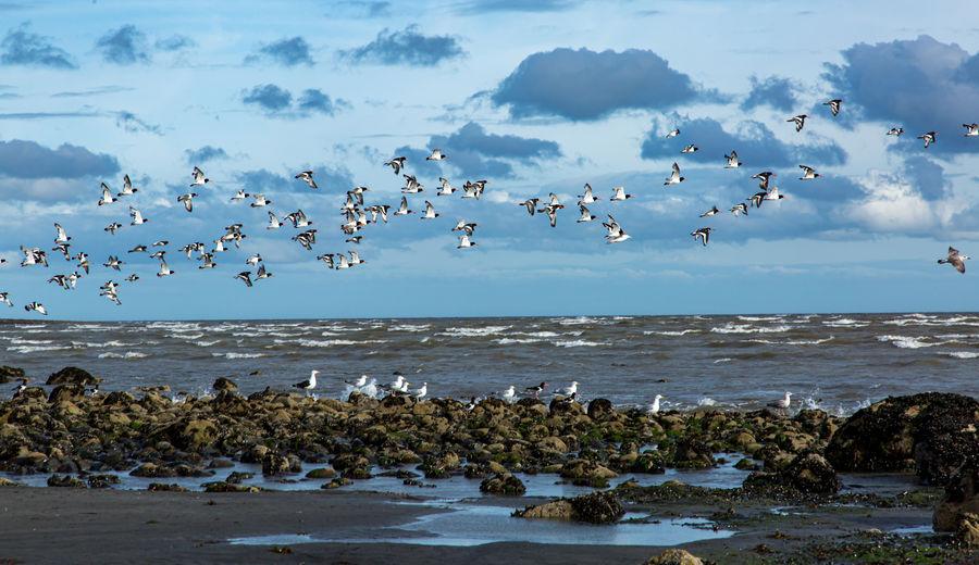 Flock of birds flying over beach