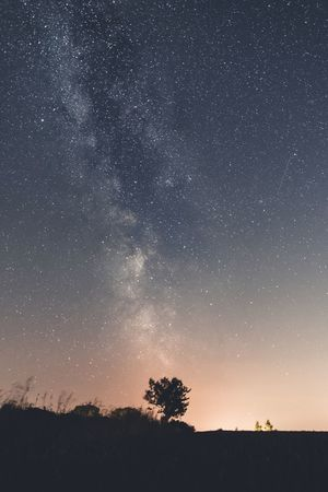 Silhouette. Astronomy Star - Space Night Space And Astronomy Milky Way Silhouette Space Constellation Galaxy Nature Scenics Sky Beauty In Nature Tree Low Angle View No People Moon Outdoors