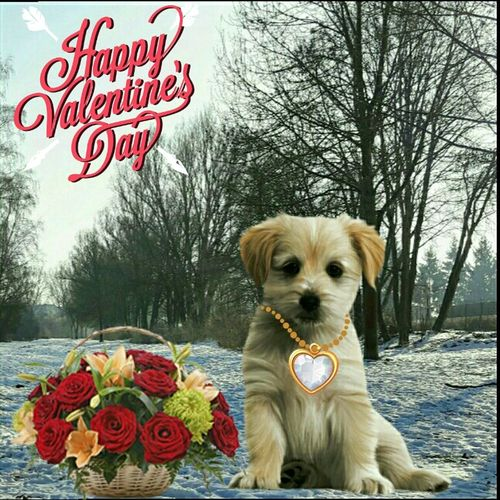 Happy Valentine's Day Pets Dog Text Tree DogEyeEm Beliebte Fotos Valentine's Day  Valentine's Day 💖😍💑 Einfach So :)