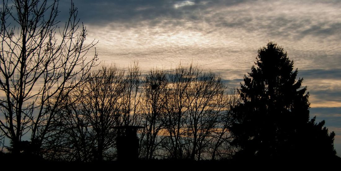 Silhouette Tree Sunset Nature Sky No People Cloud - Sky Outdoors Growth Day Beauty In Nature Pixelated