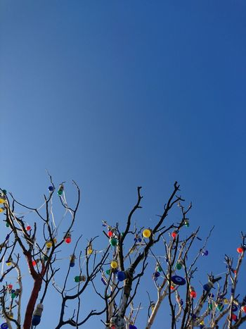 Sky Day Outdoors Nature Growth No People Low Angle View Clear Sky Fragility Beauty In Nature Tree Close-up