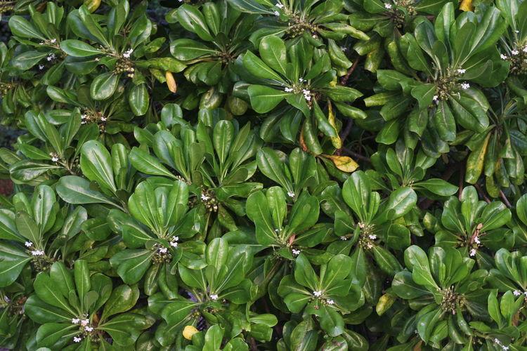 Full frame shot of green flowers