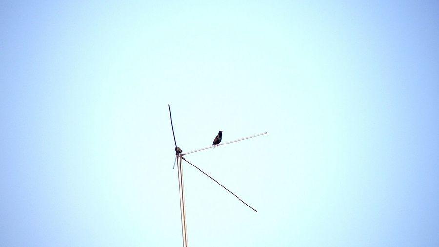 Minimalism Bird