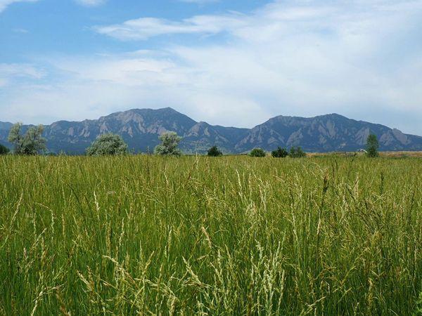 Flatirons Boulder Colorado Mountains Tall Grass Green Outdoors