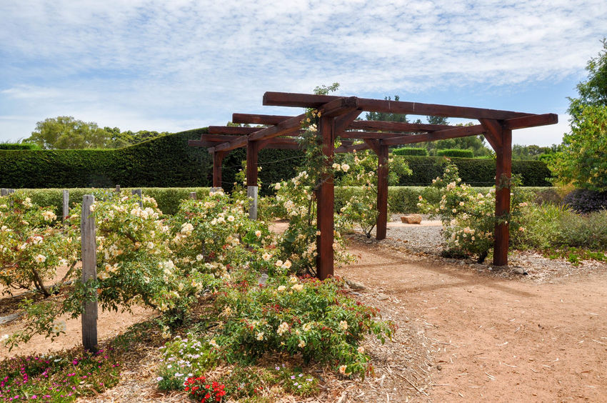 Pergola entrance with flowering plants to the hedge maze at Amaze'n Margaret River in Western Australia. Amaze'n Margaret River Arbor Beauty In Nature Botanical Gardens Day Entrance Flowering Plant Flowers Garden Garden Path Growth Hedge Maze Hedges Nature Nature Outdoors Pergola Plant Scenics Sky Tourist Attraction  Tree Vines Western Australia Wooden