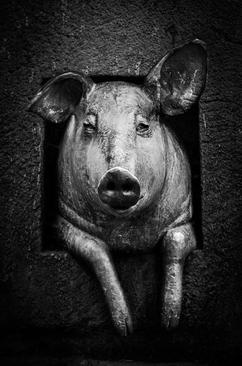 Animal Head  Animal Themes Black And White Blackandwhite Bronze Close-up EyeEmNewHere Livestock Looking At Camera Mammal Monochrome No People One Animal Portrait Statue Art Is Everywhere Art HEAD Headshot Pig Front View The Street Photographer - 2017 EyeEm Awards