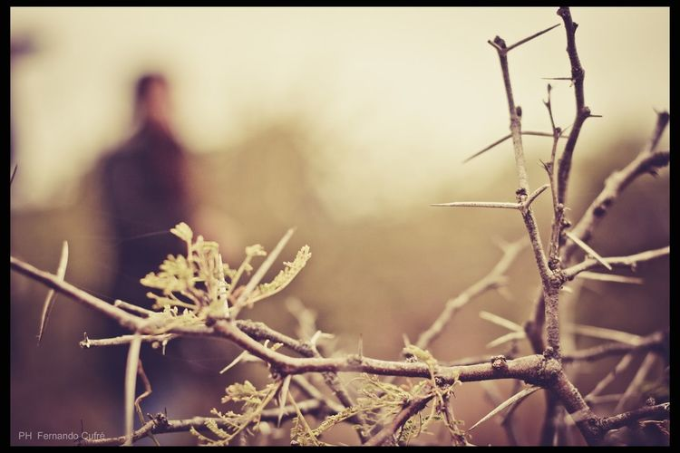 Selective Focus Photographer Photography Thorn Our Best Pics Capture The Moment Depth Of Field Bokeh