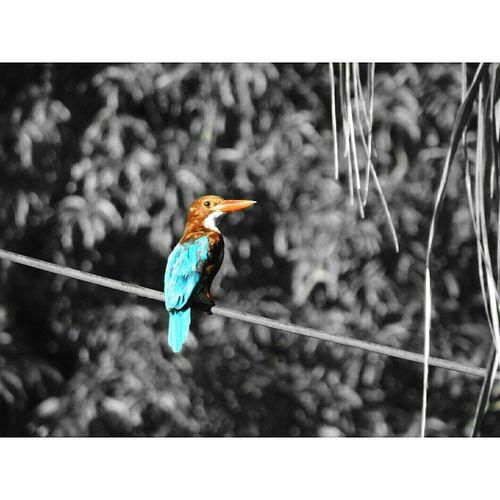 Bird Animal Themes Kingfisher Beauty In Nature Coloursplash Coloursplash The World Coloursplash_Nature Tree