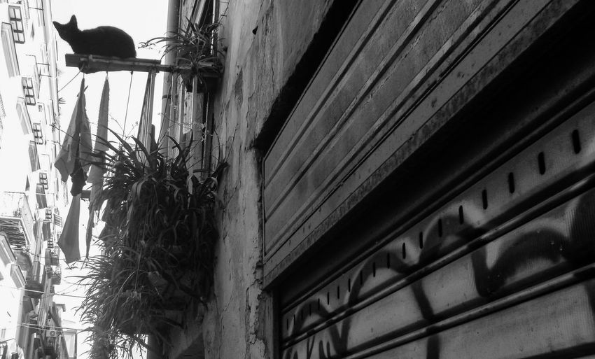 Low angle view of bird perching on old building