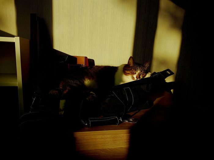 Close-up Cat♡ Cats Of EyeEm Cat Lovers Sunlight Green Eyes Relaxation A Sunny Room Window Lie In The Sun Sunbeam Sunlit At Sunset Glance