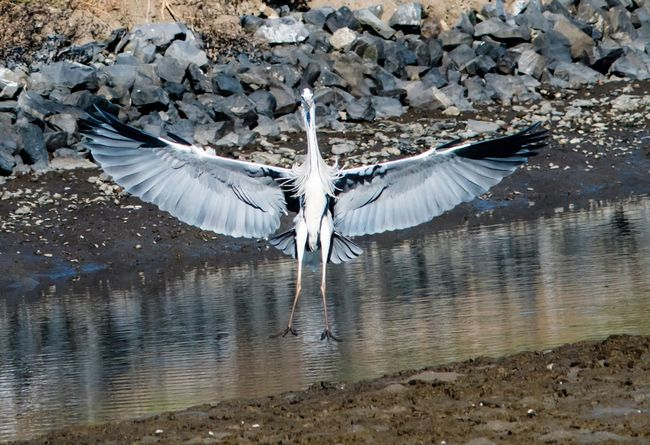 Spread Wings Bird Flying Animal Themes Animals In The Wild Animal Wing Animal Wildlife Lake One Animal Water No People Nature Day Outdoors Beauty In Nature