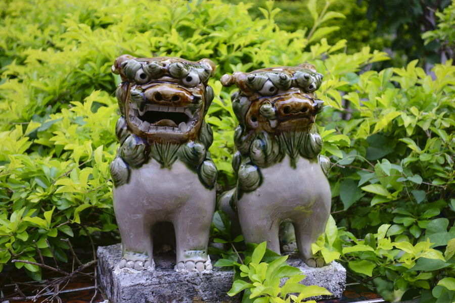 Animal Themes Close-up Day Green Color Growth Guardian Guardian Spirit Guardian Spirit Japan Lion Mammal Nature No People Okinawa Outdoors Plant Shisa Singha Superstition  Superstition Mountains Tradition