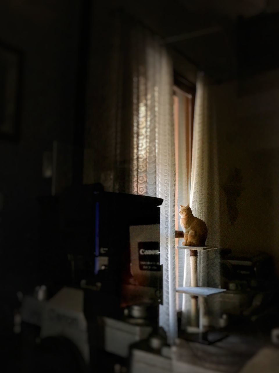 indoors, animal, mammal, domestic animals, animal themes, one animal, domestic, pets, feline, home interior, cat, domestic cat, no people, selective focus, vertebrate, window, domestic room, dark, table