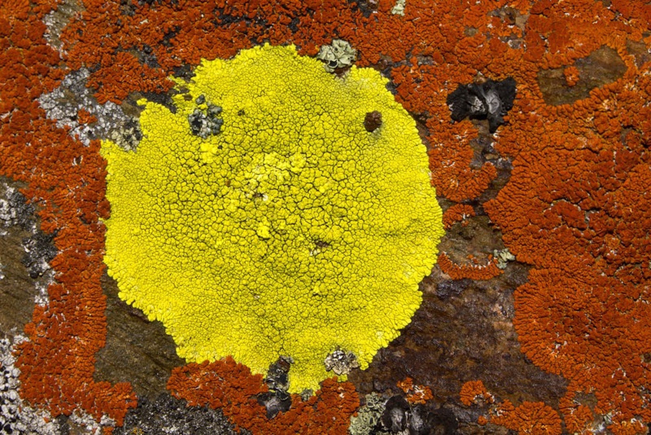 yellow, textured, wall - building feature, close-up, full frame, backgrounds, high angle view, leaf, day, outdoors, paint, weathered, no people, wall, rough, nature, pattern, growth, built structure, sunlight