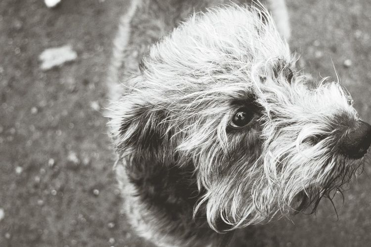 Blackandwhite Monochrome One Animal Animal Themes Eyes Are Soul Reflection Eyes Watching You Portrait Close-up Dogs Of Winter Dogslife Dogs Of EyeEm Dogwalk Dog Of The Day The Places ı've Been Today Autumn 2016 December 2016 Showcase December Bokeh From My Point Of View Focus On Foreground Pets Dog Domestic Animals Petscorner