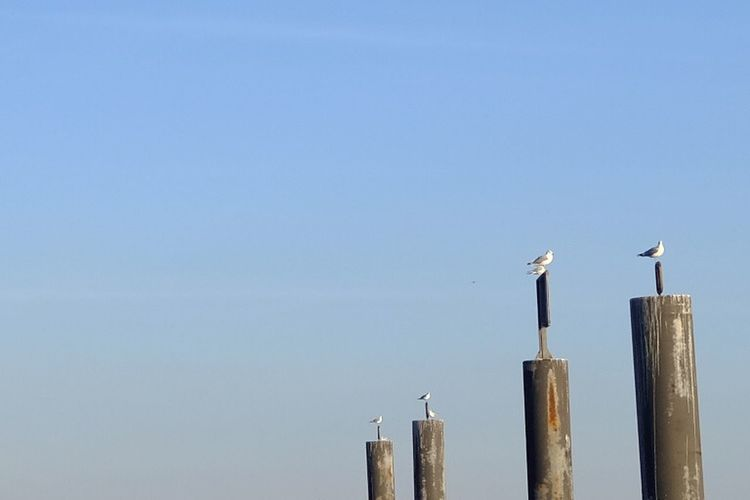 Birds Sky Perching Wood - Material Copy Space No People Clear Sky Animal Blue
