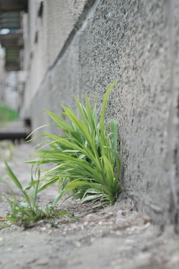 Close-up of plant growing on wall