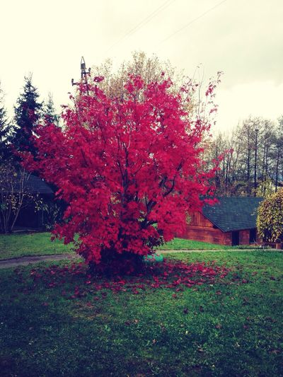 Beautiful autumn:)