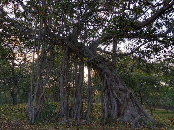 Beauty In Nature 🌿❤ Tree Outdoors Tree Trunk Nature Day No People Landscape Scenics Sri Lanka Polonnaruwa Travel Destinations Vacations Trees Tree_collection  Treescollection Treescape