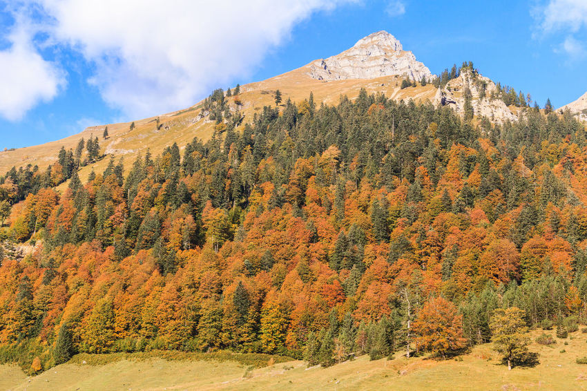 Karwendelgebirge on maple back. Austria Autumn Background Crack Beauty In Nature Day Eng Hinterriß Kartenden Mountains Landscape Large Maple Back Maple Floor Mountain Nature Nature Conservation No People Outdoors Risstal Scenery Scenics Sky Tranquil Scene Tranquility Tree Tyrol Vomp