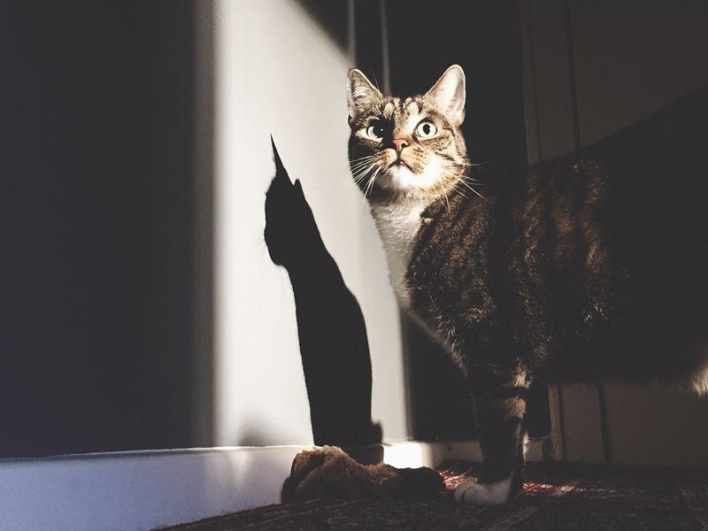 Catman! Open Edit Darkness And Light EyeEm 5.0 Light And Shadow Shadow Cat EyeEm Best Shots Light Shadows & Lights Lightandshadow EyeZoom
