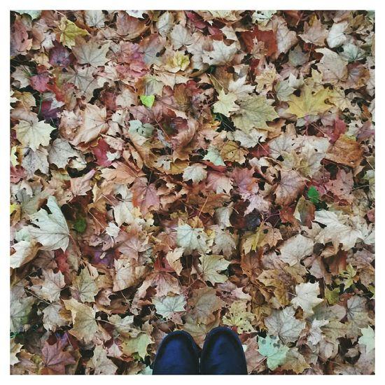 From Where I Stand Fromwhereistand VSCO EyeEm Autumn Fall осень фотоног краски осени Autumn Colors