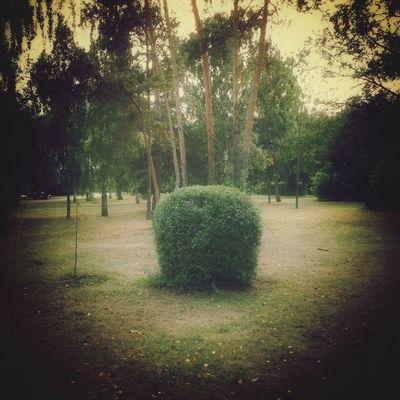 осень Природа Nature Omsk