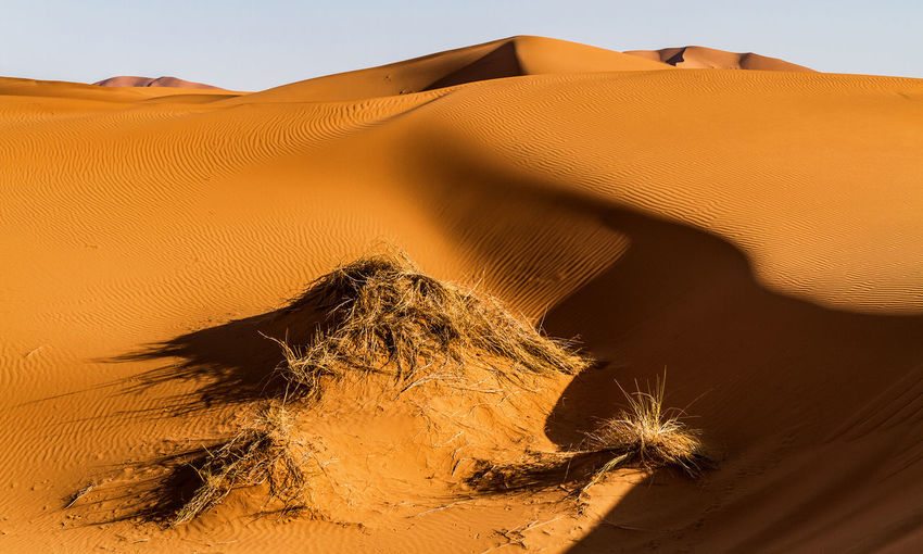 Light and Shadow in the Sahara desert Beautiful Nature Desert Dunes Ergchebbi Light Lighting Equipment Morocco Nature Photography Tranquility Dry Flower  Landscape Merzouga No People Sahara