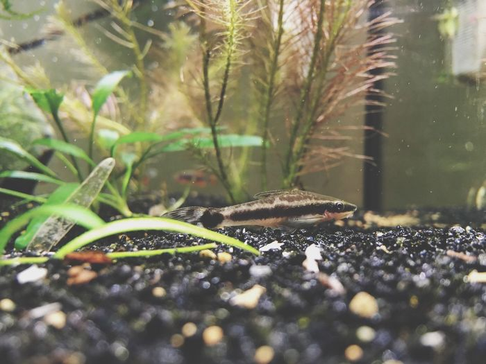 Nature Plant Growth Leaf Water No People Green Color Animal Themes Outdoors Day Close-up Beauty In Nature Fish Catfish Otto Catfish Tank Micro Tank Micro Fish Plants