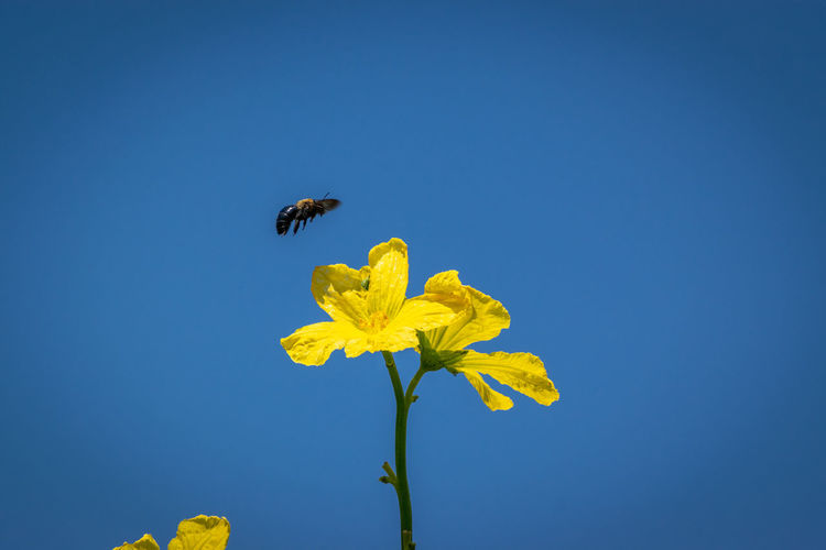 View of yellow flower against blue sky