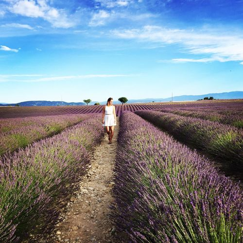 Valensole Valensole Plateau Provence Lavender Lavender Field White Dress First Eyeem Photo