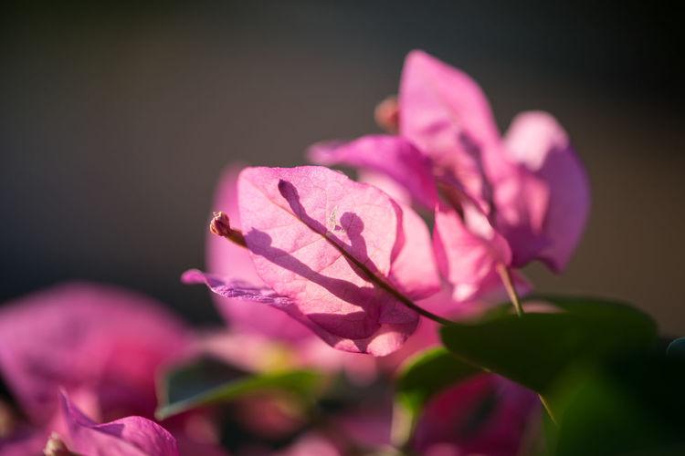 pink leaves on