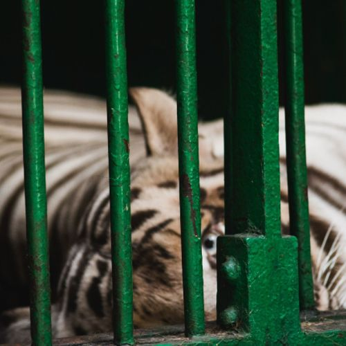 Animal Themes One Animal Zoo Animals In Captivity Mammal Cage Green Color No People Day Animals In The Wild Animal Wildlife Domestic Animals Trapped Outdoors Close-up Security Bar Nature