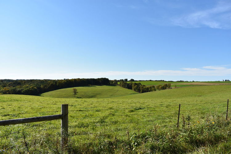 Farm Wisconsin Wisconsin Landscape Wisconsin Life Agriculture Beauty In Nature Blue Blue Sky Clear Sky Day Field Grass Hill Landscape Nature No People Outdoors Paddock Pasture Rural Scene Scenics Sky Tranquil Scene Tranquility Tree