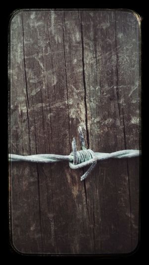 My first Barbed Wire Wednesday Streamzoofamily For My Friends That Connect Eye Em Best Edits