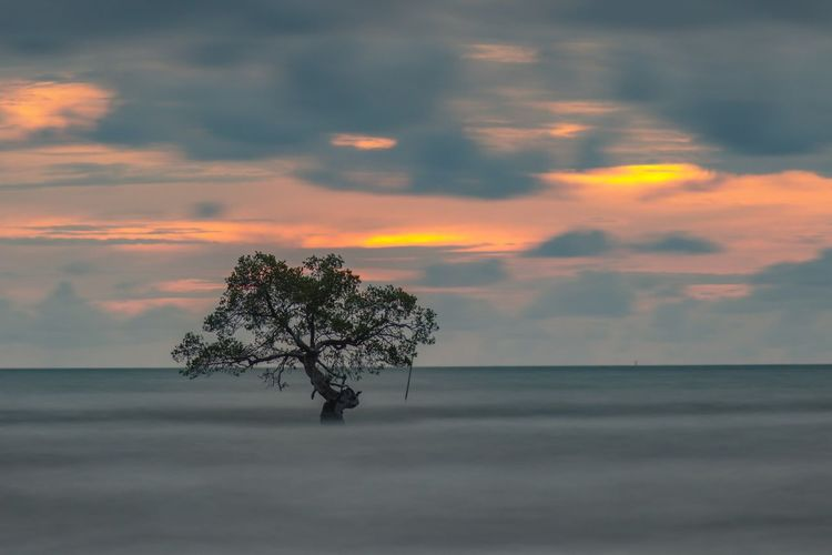 Lonely Tree Tree Beauty In Nature Cloud - Sky Sky Sunset Plant Tranquility Tranquil Scene Scenics - Nature Sea Horizon Land Water Nature Orange Color Outdoors Field Isolated Horizon Over Water No People