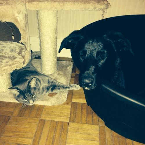 Marley et Nala Dog Cat