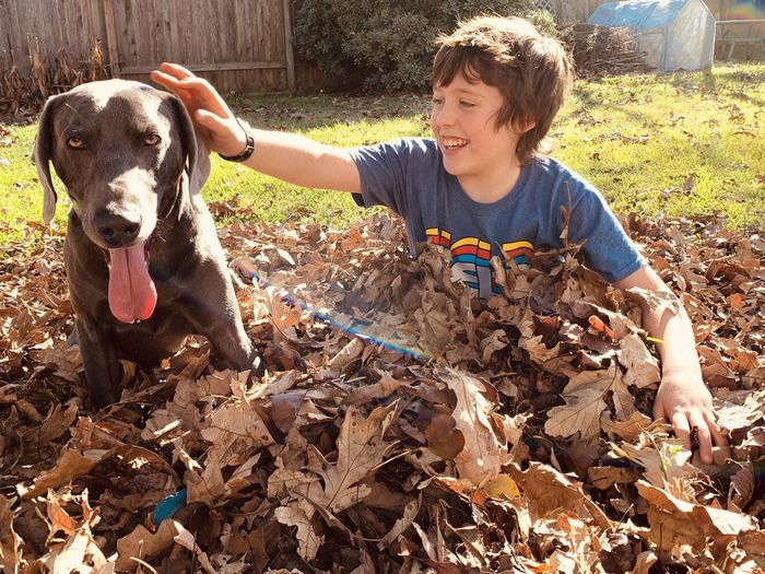 Portrait of dog with boy playing with autumn leaves in yard