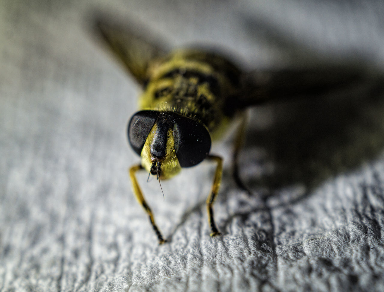 one animal, animal themes, animals in the wild, insect, animal wildlife, selective focus, close-up, macro, no people, day, outdoors, nature