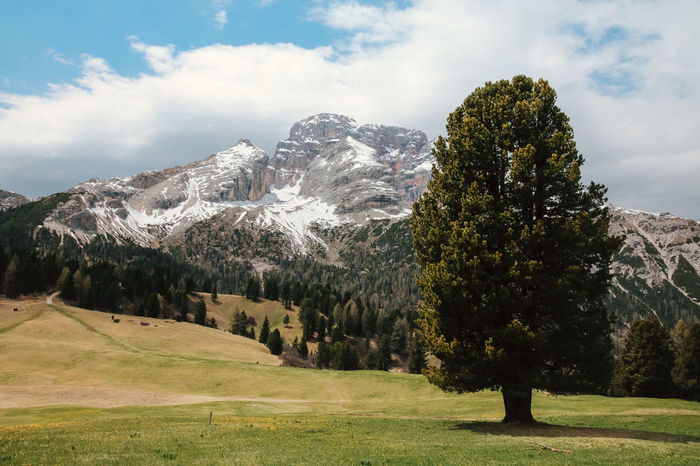 A lonely tree with snowcapped mountains in the background, Trentino Alto Adige - Dolomites Alone Calm If Trees Could Speak Lonely TreePorn Beauty In Nature Day Grassland Greenery Landscape Mountain Mountain Range Mountains And Sky Nature No People Outdoors Scenery Scenics Single Tree Snowcapped Mountain Tranquil Scene Tranquility Tree Trees And Nature Valley