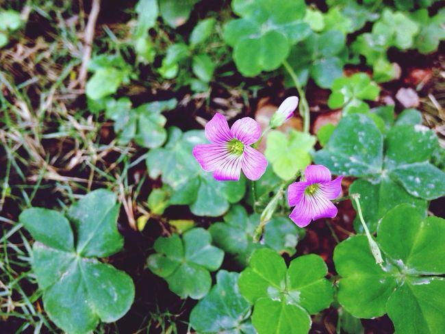 Flower 拈花惹草 Nature