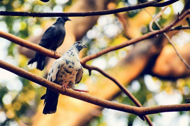 🐦 EyeEm Selects Bird Perching Defocused Leopard Branch Tree Animal Themes Close-up