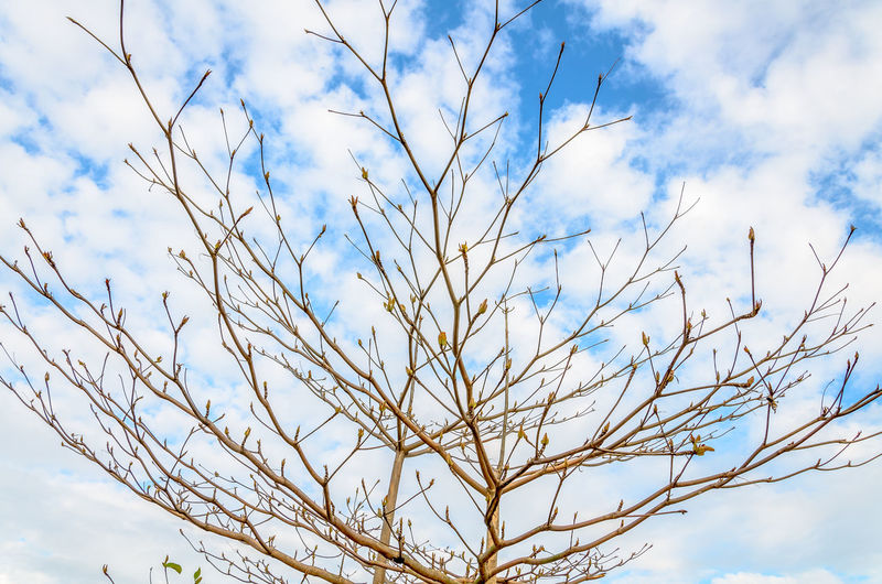 Bare Tree Beauty In Nature Blue Branch Close-up Cloud - Sky Day Growth Low Angle View Nature No People Outdoors Plant Scenics - Nature Selective Focus Sky Sunlight Tranquility Tree White Color