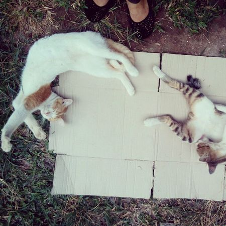 Morning cuddling Kitty Cat Papoy Goden