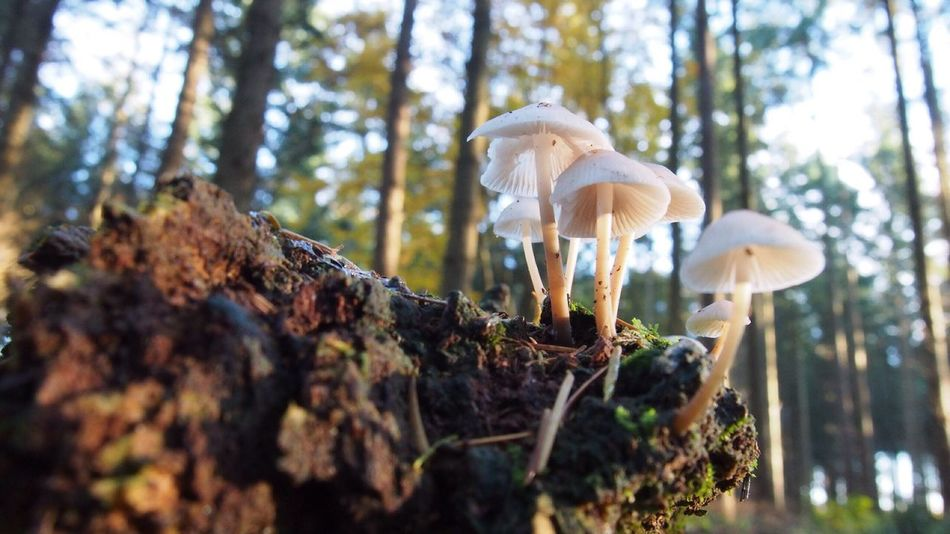 We are so fragile...🍄👌🍄 In The Forest Shrooms Fungi Nature Mushroom Growth Fungus Tree Toadstool Forest Beauty In Nature Outdoors Fragility No People Day Close-up Wild